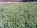 Cover crop establishment January