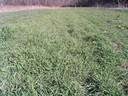 Cover crop establishment January