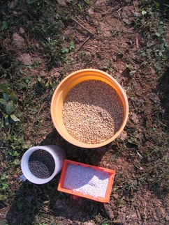 Grains and legumes together