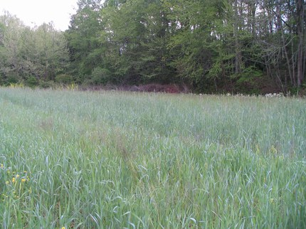 Ryegrass in nursery production