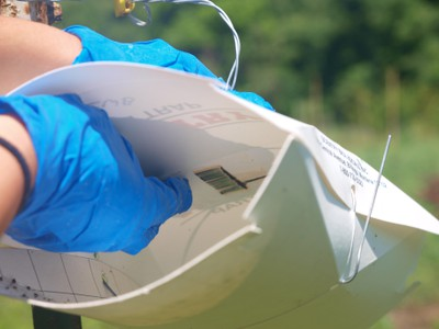 Changing the pheromone lure in a wing trap.