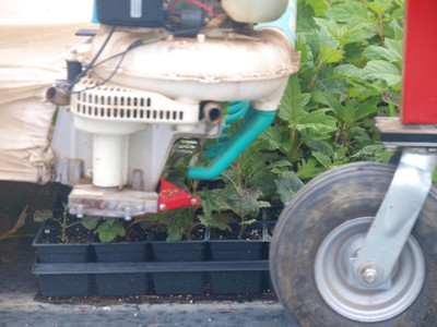 Cutting mehcanism of mechanical stem cutting collector over hydrangea stock plants