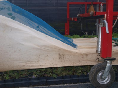 Mechanical stem cutting collector passing over hydrangea stockplants