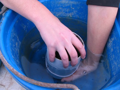After substrate is saturated, plug bottom holes with hand to remove from bucket