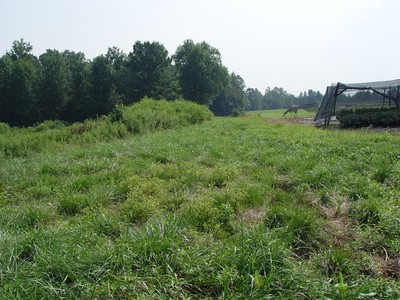 Grassed runoff strips (nursery on right) that allow water to run broadly over grassed area and not in a ditch..