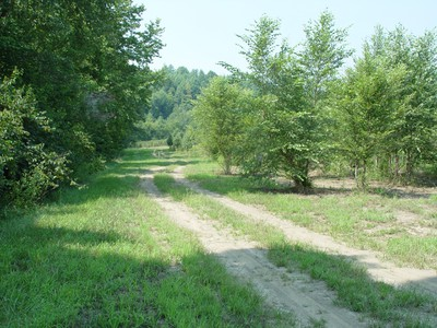 Riparian strip (left of drive) that is 30 feet grass and 20 feet trees (most of strip not shown)