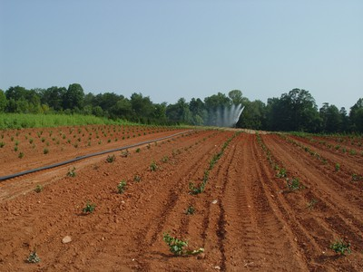 Hose and gun for field crops