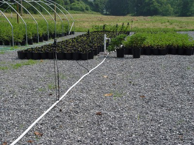 Irrigation risers and irrigation lines that can be mobile.