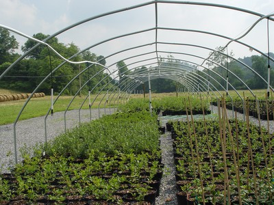 Irrigation from hanging system in overwintering structure